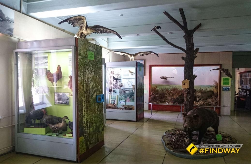 Маріупольський краєзнавчий музей, Маріуполь