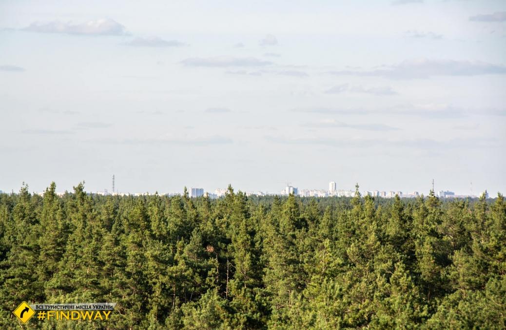 Пожарная башня, Васищево