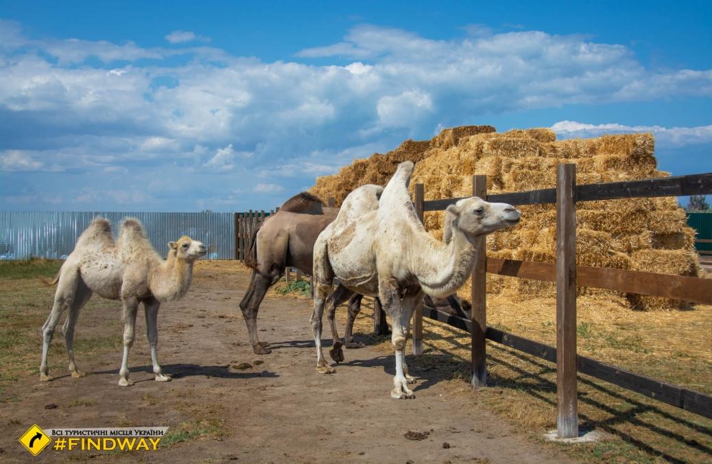 Сафарі-парк, Щасливцеве, Арабатська стрілка