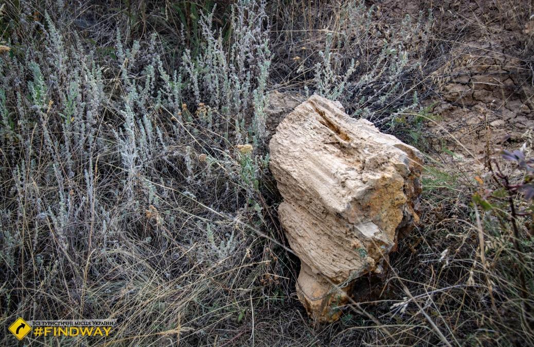 Дружківські скам'янілі дерева, Дружківка
