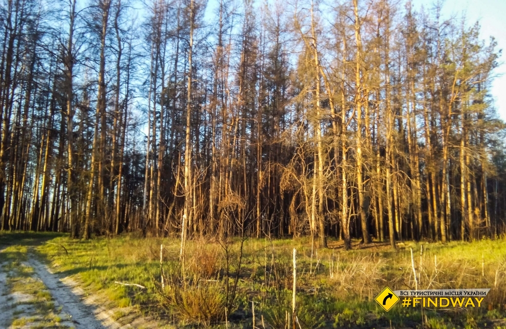 Red Forest, Pripyat