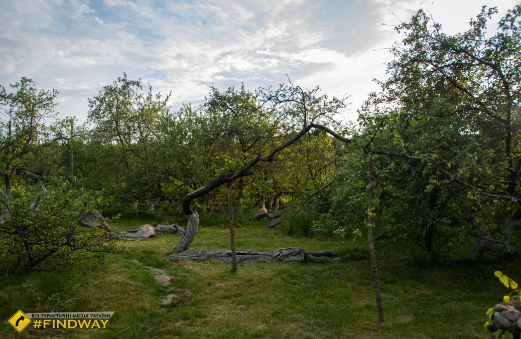 Apple-colony, Krolevets