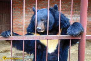 Zoo, Stariy Saltiv