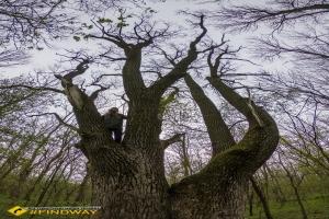 Заповідне урочище «Лабіринт», Трикратський ліс