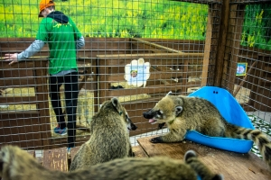 "Contact Zoo ""Yenotyya Country"", Kherson"