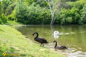 Полтавський міський парк