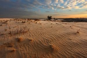 Kharkiv desert (hilly sands), Kitsevka