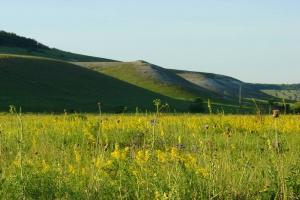 крейдяні гори дворічанського району, харківська область Цікаві місця України куп'янськ