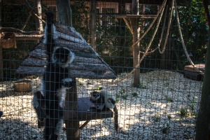 Rivne Zoological Park (Zoo, Rovno)